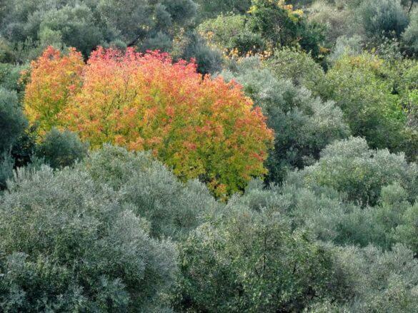 Höstfärger på Kreta